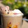 【小編直擊】柯基咖啡館~擋不住的柯基小屁屁魅力!