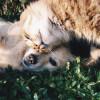 【疫情更新】陆专家说宠物需隔离 世卫:没证据显示猫狗会感染新型冠状病毒