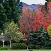 The Arboretum Free Day 洛杉矶植物园免费开放日 (2/18)