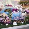 Santa Barbara International Orchid Show 國際蘭花展 (3/13-15)