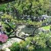 Sakura Matsuri – Cherry Blossom Festival 樱花祭 (3/15)