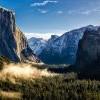 疫情下的赢家 加州优胜美地国家公园土狼现身