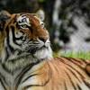 疫情致营运困难 德动物园:可能把园内动物喂给其他吃