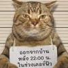 泰可愛!虎斑貓違反宵禁 被警察逮捕「抱警處理」