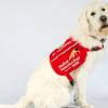 病毒有氣味?賓州大學訓練狗聞新冠病毒