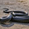 驚!天熱開冷氣消暑 竟冒出40多條蛇亂竄