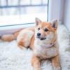 FDA聲明: 人有可能傳播新冠病毒給寵物