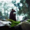 澳最嚴重山火 近30億隻本土動物難逃厄運