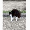 拱背弓身夸张炸毛 「愤怒的猫」让网友全笑翻