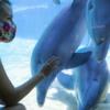 L.A. Zoo. SeaWorld 户外公园纷纷重启  Disney Universal 主题乐园蓄势待发!洛杉矶疫情要过去了吗?