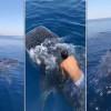 影/想當水行俠?男子跳海騎鯨鯊引發熱議