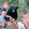 野生黑熊討食物!男餵三明治挨批「會害牠被射殺」