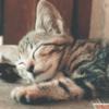 为何养猫的人越来越多? 网曝关键:空间小、加班时间长