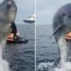 對鏡頭燦笑!超友善海豚熱愛水上摩托車 還探出水面給人拍