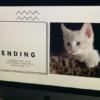 小女孩做PPT求爸爸養貓 獲微軟回應:我們被說服了