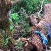 男砍树被压4天竟奇蹟生还 警透露他的身分成存活关键
