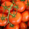美味度大打折扣!維持番茄美味的秘訣:千萬別做這事
