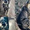 全世界僅存不到10隻!攝影師拍下罕見「黑色老虎」