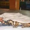 一童一狗街上相擁而眠暖哭網友 9歲的他待領養網籲:別拆散!