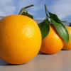 每天2顆柳丁預防感冒、解便秘! 營養師列7大意想不到的好處