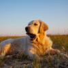 狗狗立大功 研究:嗅出COVID-19準確率達95%
