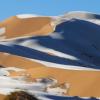 撒哈拉沙漠下雪了! 駱駝現身雪地奇景曝光