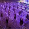 影/疫情下如何安全辦場演唱會?「太空泡泡」提供解方