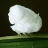影/攝影師曬照亞馬遜雨林療癒小生物 網笑:爆米花不要跑