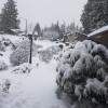 北極寒流縱掃全美 衝擊能源、農產品生產