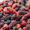 控血糖、助排便、防泌尿道感染…桑葚好处多,营养师教怎么吃