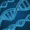 調查染疫重症化 日研究團隊鎖定特定基因異常