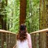 与天然巨人的接触 !北加州红杉公园栈道 Redwood Sky Walk 全新开幕
