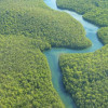 亞馬遜雨林遭破壞 逾萬物種面臨高度滅絕風險