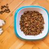 研究:餵狗狗生食可能助長抗藥性細菌擴散