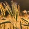 COVID-19 影响 全球饥饿人口增幅达数十年来最大