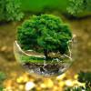 养成这8个简单的生活习惯 绿色环保又省钱