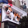 3D技術加持 巨大花貓現身東京新宿建物外牆