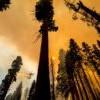 「以火攻火」成效佳 加州运用古早智慧抗林火