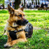 服務犬尋找新家!民眾其實能領養未能成功畢業的狗狗