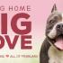 給牠一個家!spcaLA本月推領養優惠 為大型狗狗尋找新家