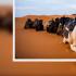 骑怀孕骆驼惨遭抛飞断手 女怒告售票网站未先告知