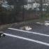 貓咪也要保持社交距離! 三貓佔停車位萌翻全網