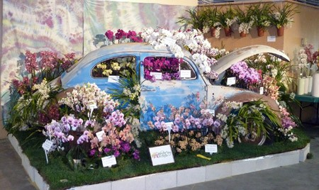 sb orchid show 3