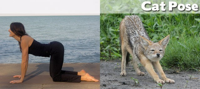 yoga poses09