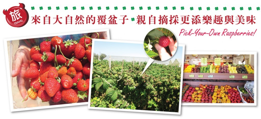 berryfarm-628-01