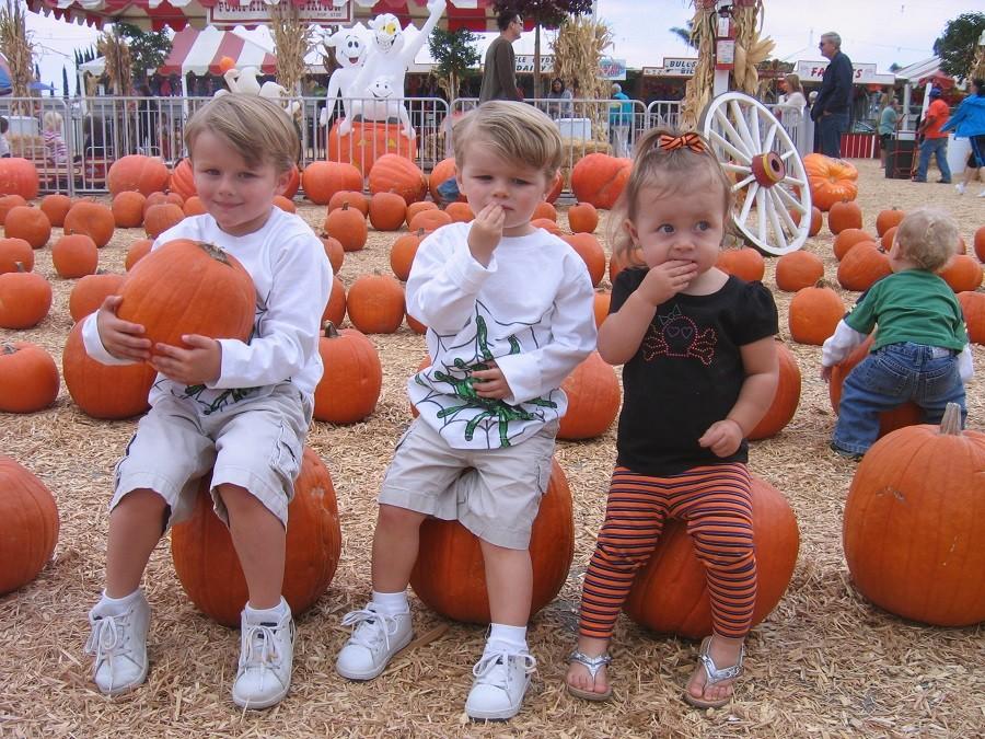 pumpkin city 3