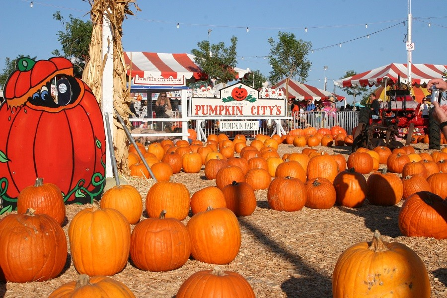 pumpkin city