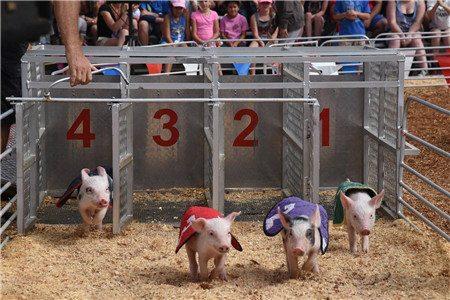 San Diego County Fair005