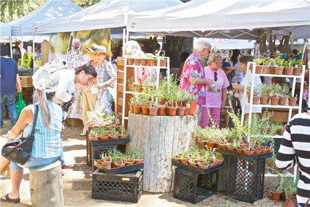 lavender-festival-003