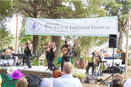 lavender-festival-006
